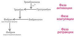 Система свертываемости крови - Диагностер